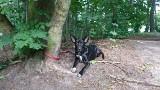 Kilkulatek znalazł psa przywiązanego do drzewa. Zwierzę trafiło do schroniska