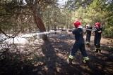 Pożar lasu w Bydgoszczy. Na miejscu z żywiołem walczą strażacy z 5 zastępów