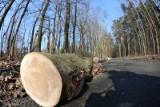 Katowice: będzie wycinka drzew z wpisanego do rejestru zabytków parku
