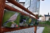 Nowa atrakcja turystyczno-przyrodnicza w Bukowsku koło Sanoka [ZDJĘCIA]