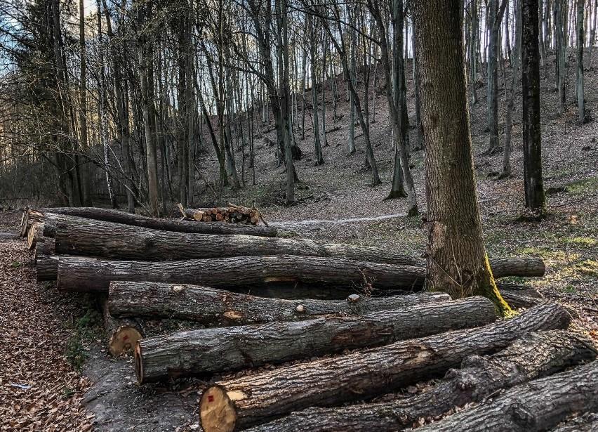 25.04.2021 gdansk. trojmiejski par krajobrazowy. las....