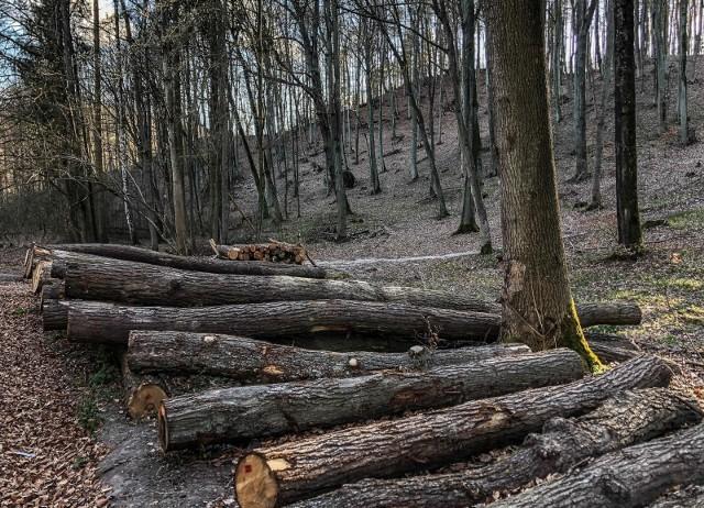 25.04.2021 gdansk. trojmiejski par krajobrazowy. las. wycinka drzew.  fot. karolina misztal / polska press/dziennik baltycki