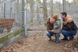 Mały Franek dzięki fundacji Mam Marzenie i poznańskiemu zoo spotkał się z uratowanymi tygrysami [ZDJĘCIA]