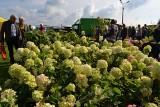Jesienna Wystawa Ogrodnicza 2018 w Minikowie z karpiem i piknikiem niepodległości - już w niedzielę