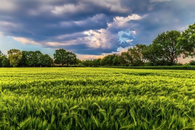Europejskie Forum Rolnicze 2021 trwa od 24 do 26 marca jako EU Agro-Trade Platform.