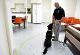 Stany Zjednoczone: pierwsze psy policyjne będą pomagać w wykrywaniu koronawirusa. Pomoże im w tym ich doskonały węch.
