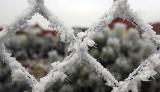 Pogoda na wtorek, 20 listopada. Będzie zimno, poprószy śnieg...
