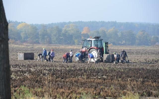 W Małopolsce Ukraińcy pracują sezonowo, głównie w rolnictwie