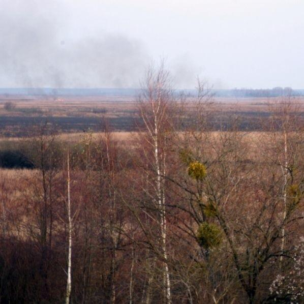 Jesienne pożary trzcin to nie przypadek. Przez sąsiedzką zawiść traci przyroda, a rolnicy - też.