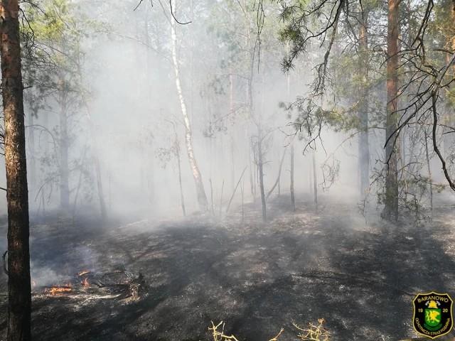 Pożar lasu, Golanka gmina Kadzidło