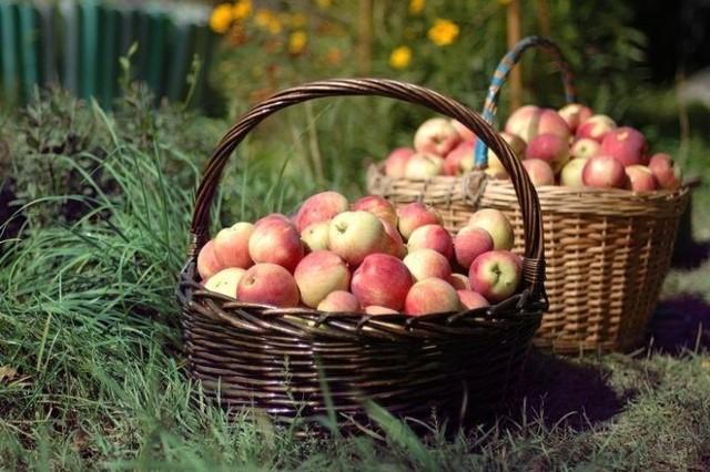 Zapraszamy na Festiwal Jabłka na Halach Targowych w Gdyni