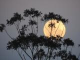 Kwiatowa Pełnia Księżyca coraz bliżej. Superksiężyc będzie można podziwiać pod koniec maja