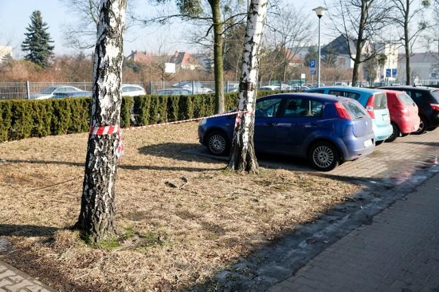 Wycinają drzewa pod centrum pulmonologii [ZDJĘCIA]