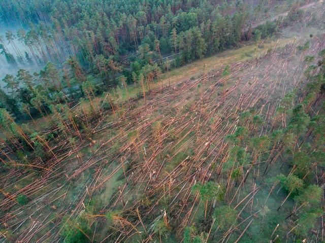 Krajobraz w lesie pod Osiem po środowych burzach. Zniszczenia się ogromne