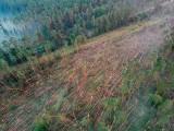 Wichura zniszczyła las w okolicy Tlenia i Osia w powiecie świeckim [zdjęcia z drona]