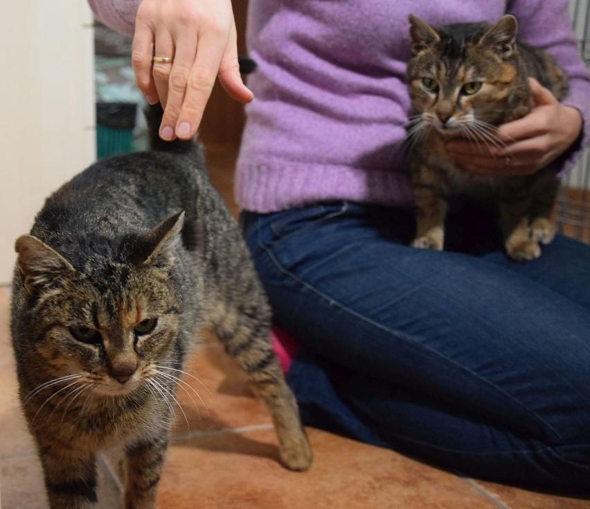Dzień Kota 2019. Kot do adopcji z Kotkowa. Jakie koty można...