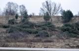 Stop wycinkom drzew! Gdańsk nie jest bierny