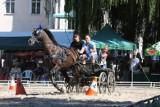 Pałac w Zakrzowie wraz parkiem idą pod młotek