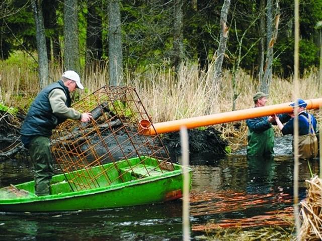 Montowanie rur przez specjalistów z Polskiego Związku Łowieckiego, to ekologiczna metoda walki z bobrami.