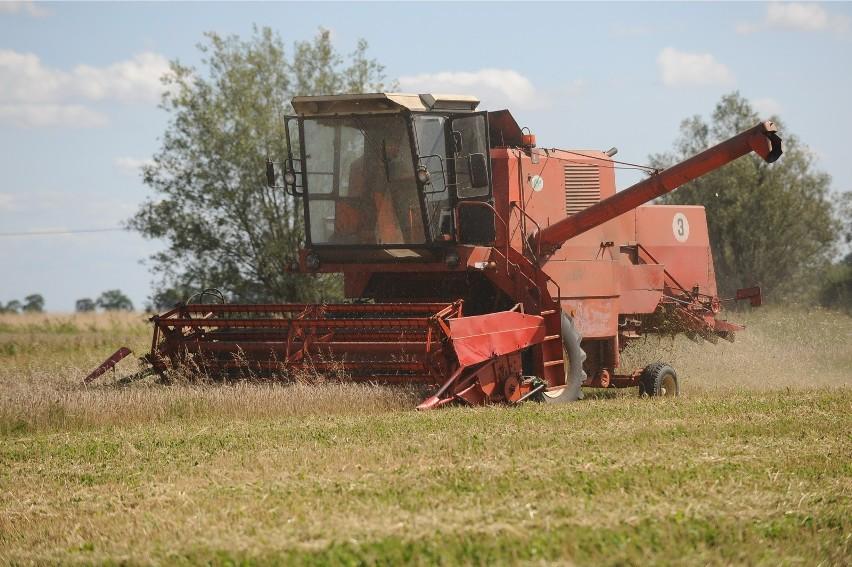 Ponad 70 proc. badanych rolników ocenia tegoroczne plony jako mniejsze lub dużo mniejsze od zeszłorocznych