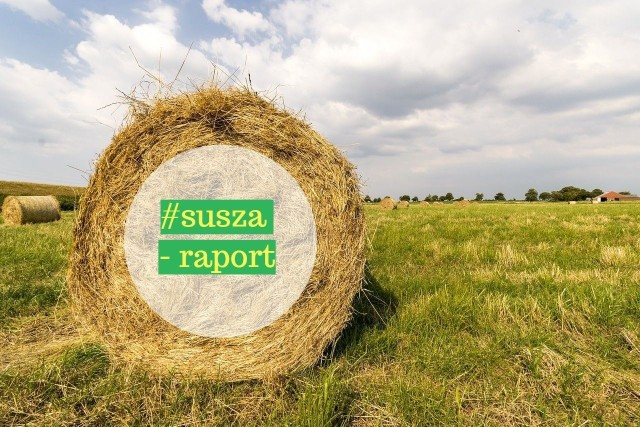 Komisje jeszcze szacują straty spowodowane suszą w rolnictwie w 2018 roku