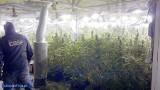 Plantacja marihuany wartej 1,5 mln zł w kurniku koło Kartuz [ZDJĘCIA]