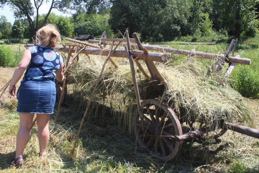 Muzeum Wsi Lubelskiej urządziło sianokosy jak przed laty. Kosiarze wyszli na łąkę, kobiety chwyciły za drewniane grabie (ZDJĘCIA)