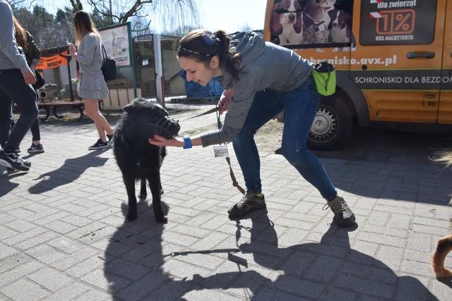 Dzień otwarty w zielonogórskim schronisku dla bezdomnych zwierząt. ZOBACZ TEŻ:   Schronisko dla zwierząt przy ul. Szwajcarskiej w Zielonej Górze jest w coraz gorszym stanie. Potrzebne jest nowe;nf