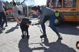 Wielu zielonogórzan wyprowadziło psy w ramach dnia otwartego schroniska [MNÓSTWO ZDJĘĆ]