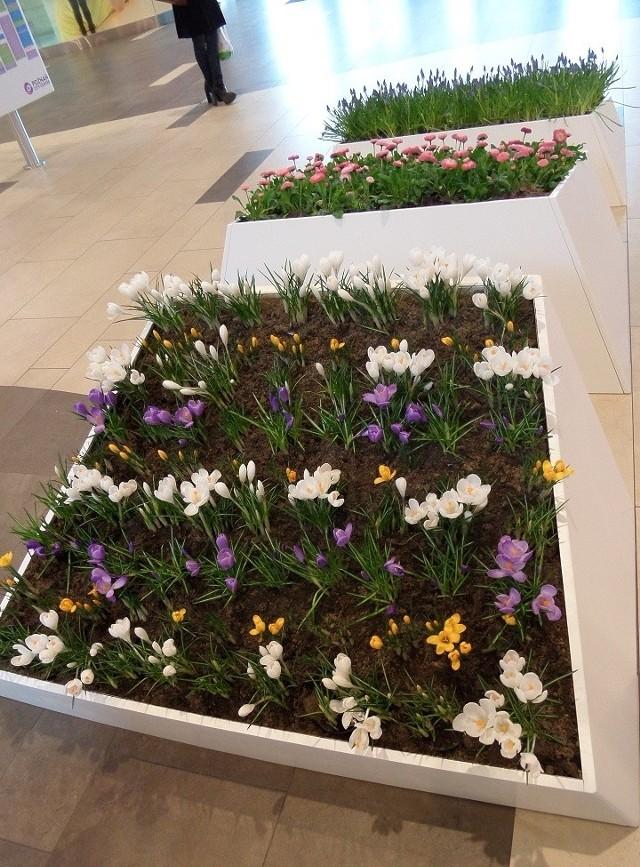 3500 żywych roślin w Poznań City Center