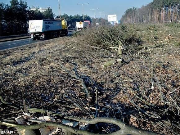 Wycinka drzew przy ulicy Struga przed rozpoczęciem prac