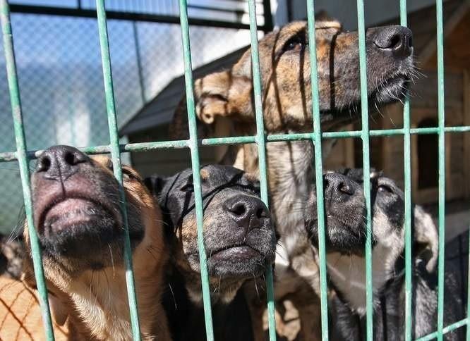 Ogólnopolskie Towarzystwo Ochrony Zwierząt Animals przekazało na Schronisko dla Zwierząt w Słupsku  blisko 105 900 zł.