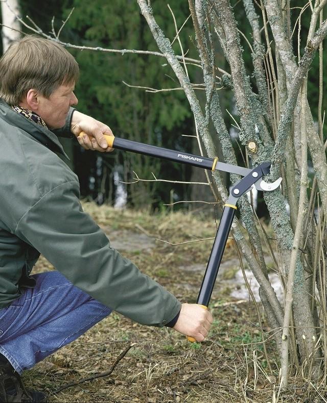 Przycinanie gałęziZimowe prace w ogrodzie