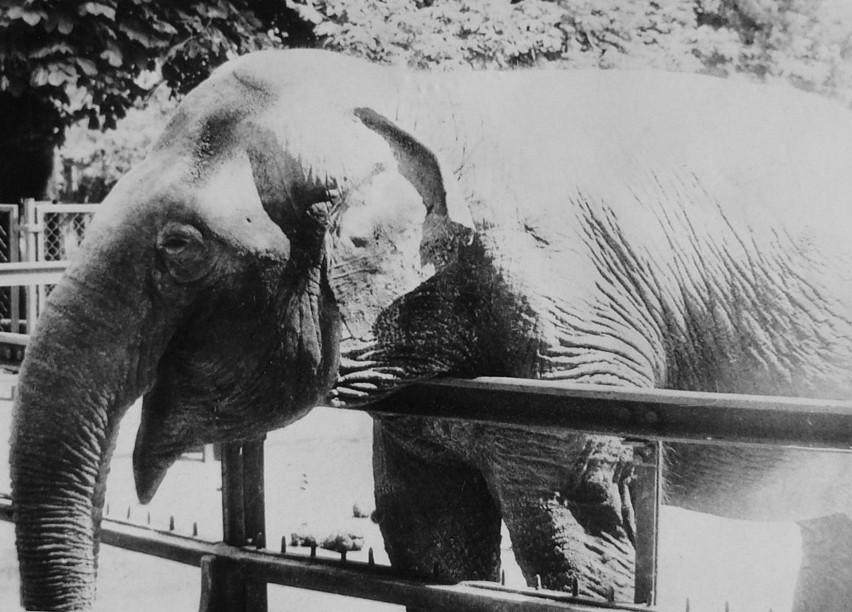 KINGA, Stare Zoo w Poznaniu...