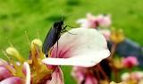 Leniowate, ziemiórki czy wtyki straszyki. Zielona Góra przeżywa inwazję owadów!
