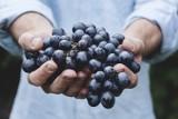 Umowa o pomocy przy zbiorach. Jakie prawa i obowiązki ma pomocnik rolnika?