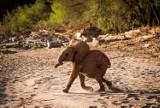 Przedszkolaki z Szemudu adoptowały... słonia. Zwierzę mieszka w Afryce, a dzieci będą wspierać go finansowo