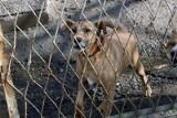Zbiórka na schronisko dla zwierząt w Kościerzynie. To odpowiedź na działania byłego senatora PiS