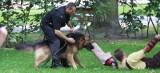 Policyjny pies nie zna litości! Nawet nie próbuj uciekać. Zobacz, co Ci grozi (wideo, galeria)