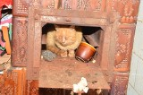 Rzeź zwierząt w Chrzanowie i w Płazie. Helena R. usłyszała zarzut znęcania się nad zwierzętami