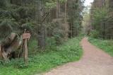 Puszcza Białowieska – najstarsze drzewa. Szlak Dębów Królewskich i Wielkich Książąt Litewskich (zdjęcia)