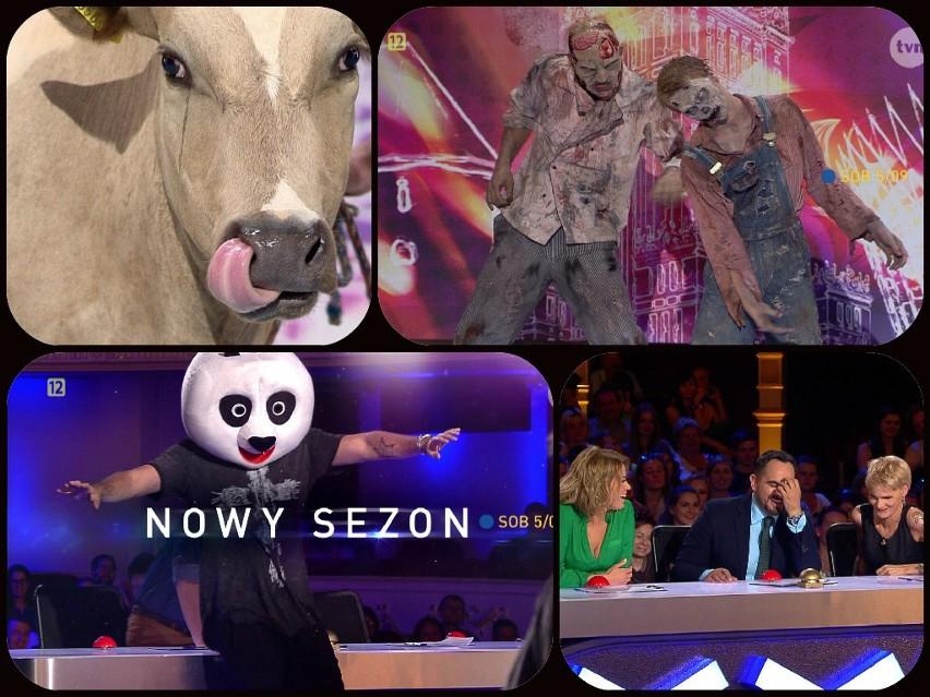 Po raz pierwszy w historii polskiej edycji programu na scenie wśród zwierząt pojawi się krowa