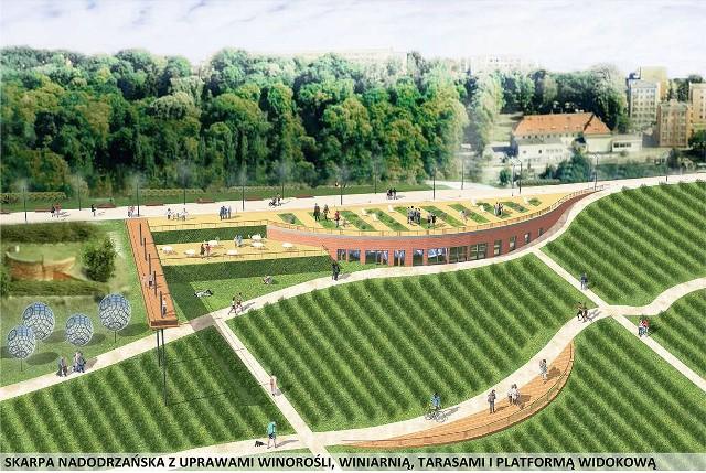 Promenada w Krośnie Odrz. ma wabić i zadziwiaćTak będzie wyglądała zmodernizowana promenada, z nowymi ścieżkami i uprawami winorośli.