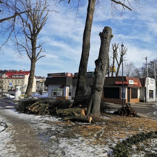 Klin Zieleni przy Lutosławskiego w niedzielę