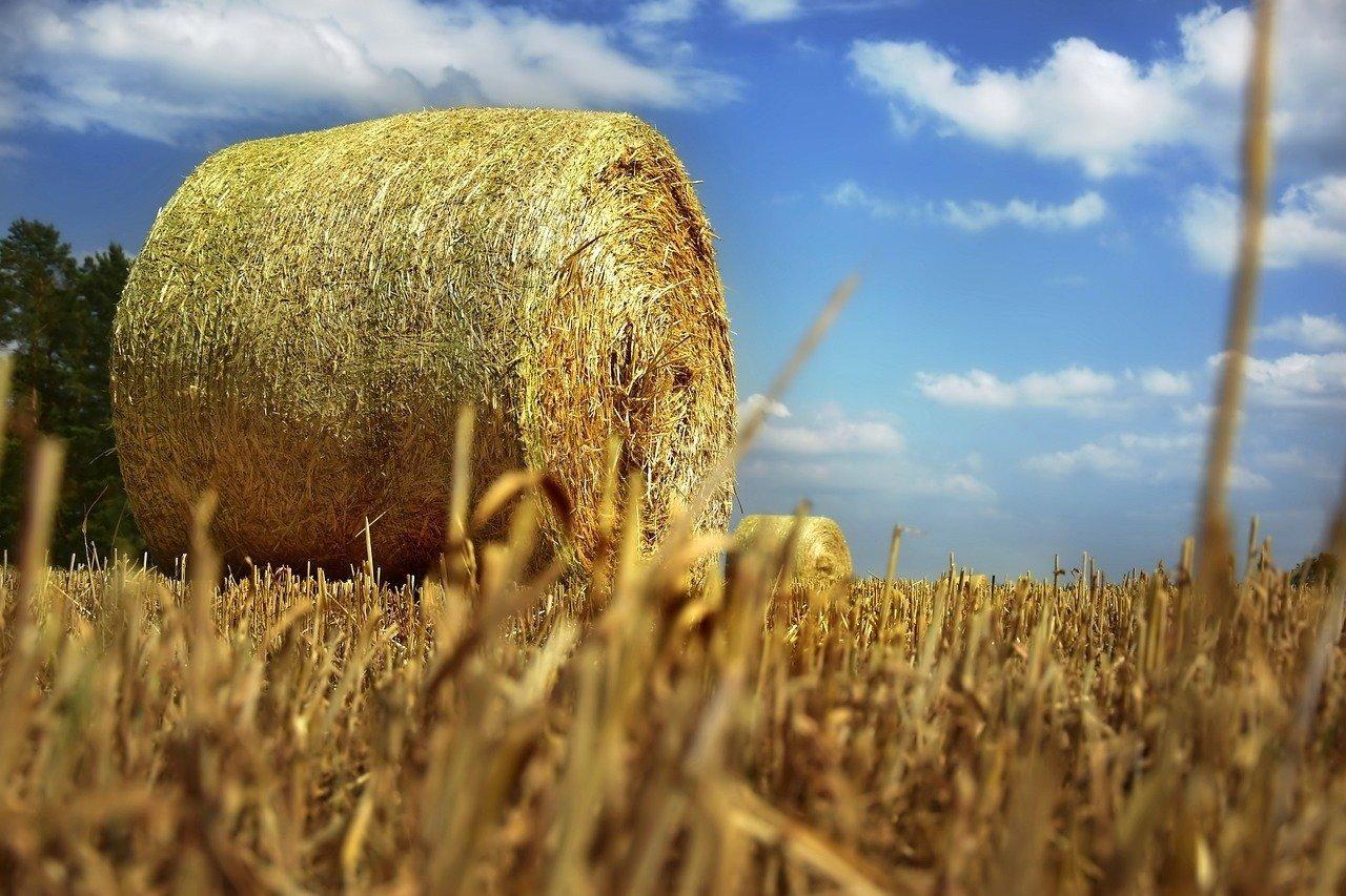 Ceny Słomy 2020 Po Ile W Tym Roku Bela Ceny Rolników W Czasie żniw 2020 Niskie Słoma Nawet Za Darmo Strefa Agro