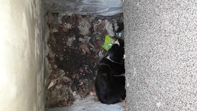 Strażnicy miejscy dostali zgłoszenie o kocie uwięzionym w otworze przy okienku piwnicznym w budynku przy ul. Lwowskiej. Kiedy dotarli na,  miejsce zobaczyli, że w jednym z otworów jest dorosły, dziki kot.Czytaj również: Pies zawisł na płocie w Zielonej Górze. Oswobodzili go strażnicy miejscy;nfMieszkańcy powiedzieli strażnikom, że kot znajduje jest w tym miejscu, już od trzech tygodni. Początkowo myśleli, że sam wydostanie się z otworu. Potem próbowali mu pomóc, ale nie udało się im.  Wrzucali do otworu jedzenie i podawali kotu wodę. Dzięki temu przetrwał. Po trzech tygodniach postanowili poszukać pomocy.Strażnicy początkowo chcieli wydobyć zwierzę rękoma, ale kot gryzł i drapał funkcjonariuszy.  W dodatku schował się w głąb otworu za odpadami, które się w nim znajdowały.Do wyciągnięcia zwierzaka  strażnicy  użyli sprzętu do odławiania zwierząt.  Po upewnieniu się, że kotu nic nie dolega, wypuścili go na wolność.WIDEO: Piroman szalał w centrum miasta