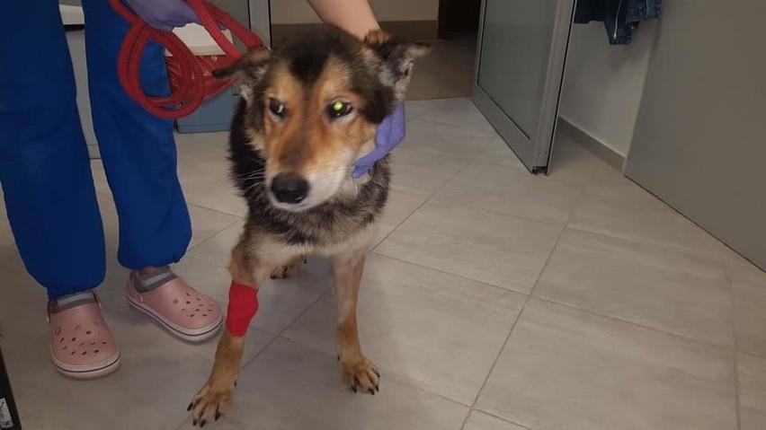 W tej chwili 6 psów czeka na nowy dom w Poznaniu, 5...