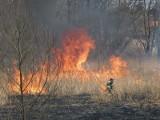 Ogromny pożar podczas żniw. Spłonęło ponad 30 tys. mkw pól