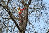 W parku miejskim w Kielcach wycięto tylko tylko część zaplanowanych drzew. Co z pozostałymi, gdzie trafi drewno? [ZDJĘCIA]
