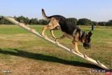 Pies z Opolszczyzny wywalczył podium w Kynologicznych Mistrzostwach Policji